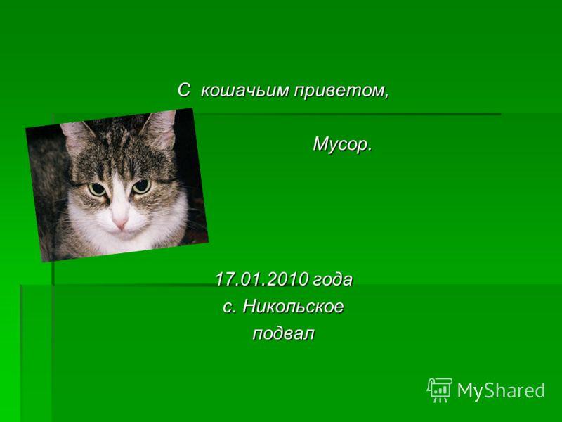 С кошачьим приветом, Мусор. Мусор. 17.01.2010 года с. Никольское подвал