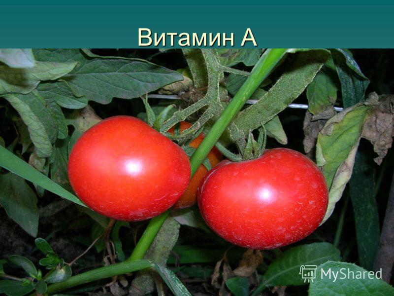 Витамин Е Зеленые листья овощей