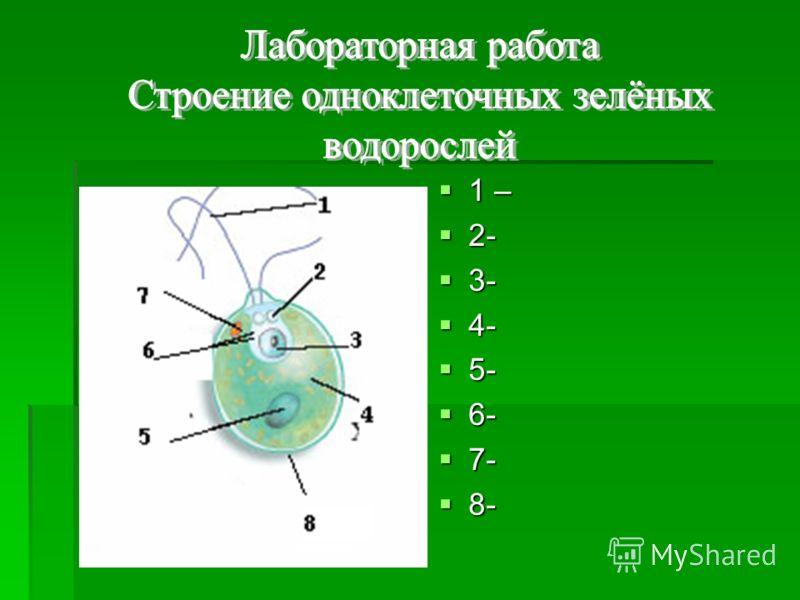 1 – 1 – 2- 2- 3- 3- 4- 4- 5- 5- 6- 6- 7- 7- 8- 8-
