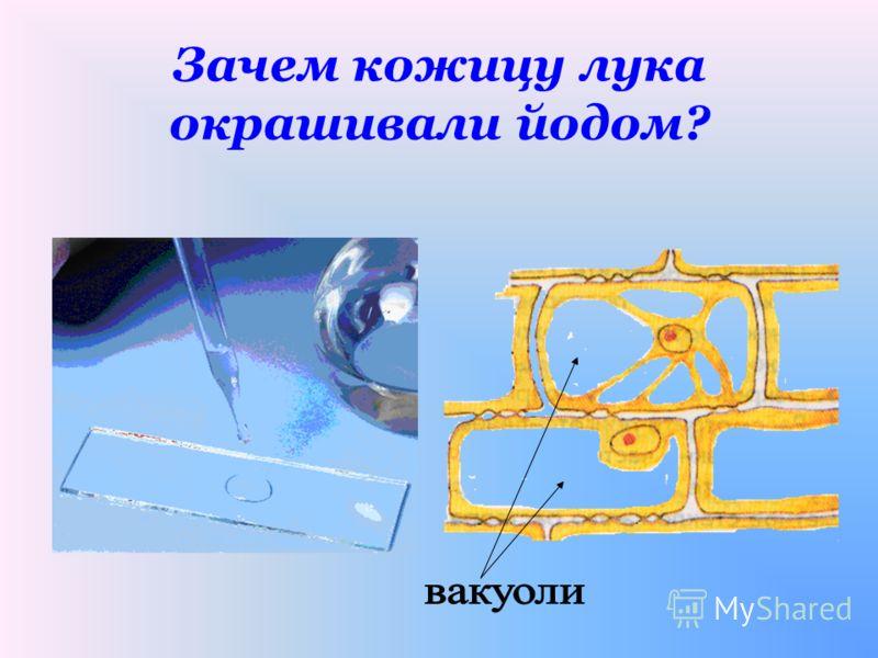 Какие части клетки вы увидели под микроскопом?