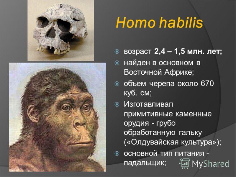 Homo habilis возраст 2,4 – 1,5 млн. лет; найден в основном в Восточной Африке; объем черепа около 670 куб. см; Изготавливал примитивные каменные орудия - грубо обработанную гальку («Олдувайская культура»); основной тип питания - падальщик;