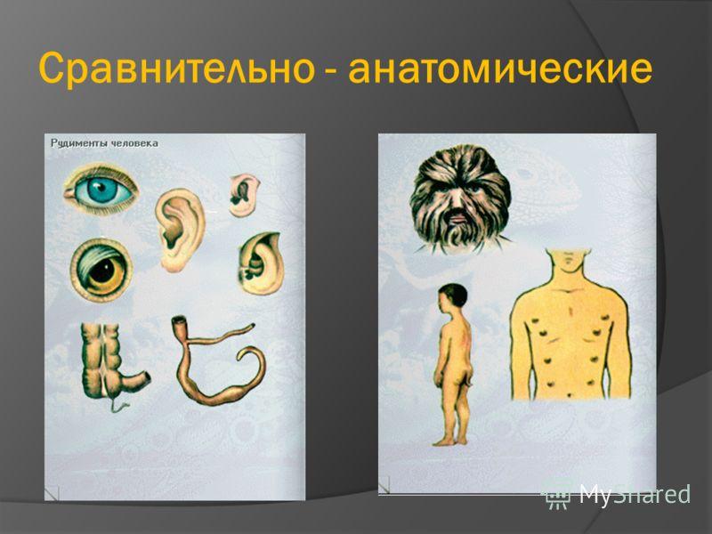 Сравнительно - анатомические
