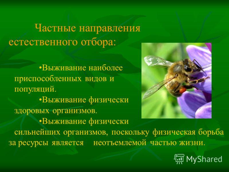 Частные направления естественного отбора: Выживание наиболее приспособленных видов и популяций. Выживание физически здоровых организмов. Выживание физически сильнейших организмов, поскольку физическая борьба за ресурсы является неотъемлемой частью жи