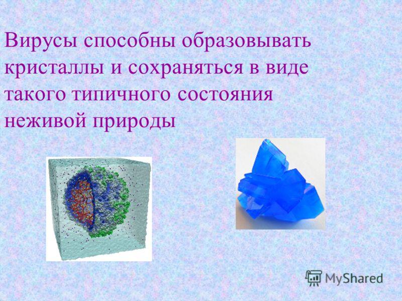 Вирусы способны образовывать кристаллы и сохраняться в виде такого типичного состояния неживой природы