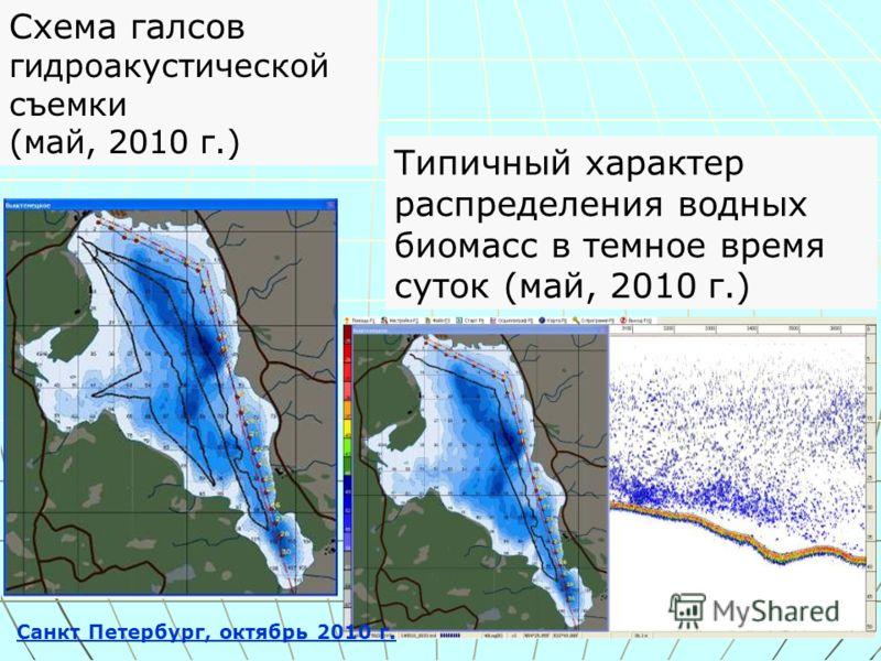 Типичный характер распределения водных биомасс в темное время суток (май, 2010 г.) Схема галсов гидроакустической съемки (май, 2010 г.) Санкт Петербург, октябрь 2010 г.