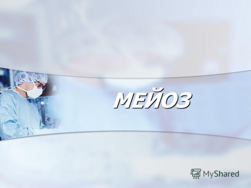 МЕЙОЗ МЕЙОЗ