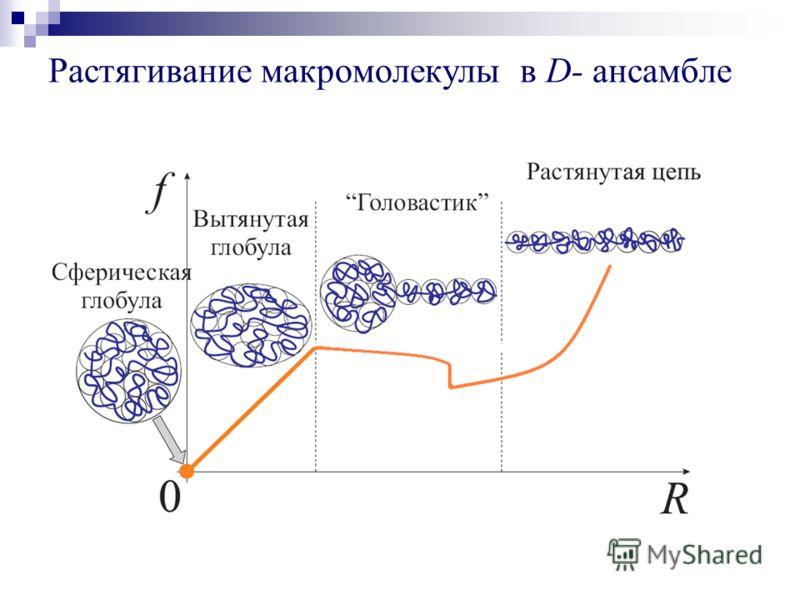 Растягивание макромолекулы в D- ансамбле