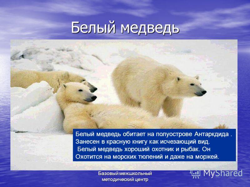 Базовый межшкольный методический центр Белый медведь Белый медведь обитает на полуострове Антаркдида. Занесен в красную книгу как исчезающий вид. Белый медведь хороший охотник и рыбак. Он Охотится на морских тюлений и даже на моржей.