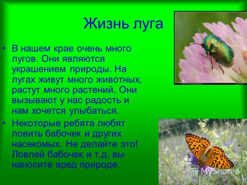 Жизнь луга В нашем крае очень много лугов. Они являются украшением природы. На лугах живут много животных, растут много растений. Они вызывают у нас радость и нам хочется улыбаться. Некоторые ребята любят ловить бабочек и других насекомых. Не делайте
