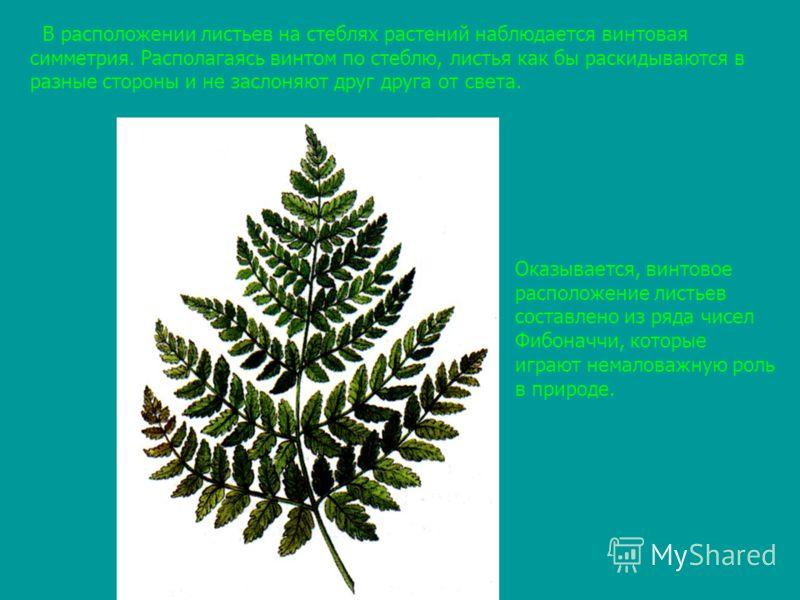 В расположении листьев на стеблях растений наблюдается винтовая симметрия. Располагаясь винтом по стеблю, листья как бы раскидываются в разные стороны и не заслоняют друг друга от света. Оказывается, винтовое расположение листьев составлено из ряда ч