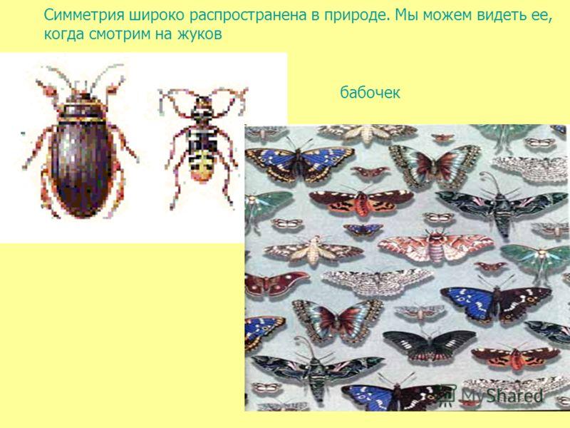 Симметрия широко распространена в природе. Мы можем видеть ее, когда смотрим на жуков бабочек