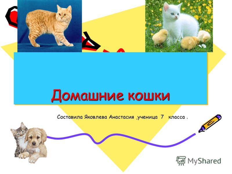 Домашние кошки Составила Яковлева Анастасия,ученица 7 класса.