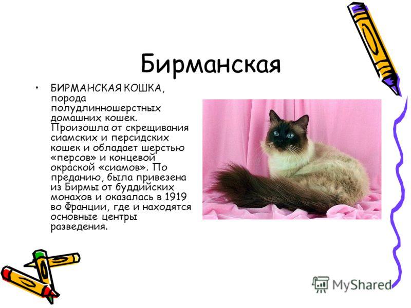 Бирманская БИРМАНСКАЯ КОШКА, порода полудлинношерстных домашних кошек. Произошла от скрещивания сиамских и персидских кошек и обладает шерстью «персов» и концевой окраской «сиамов». По преданию, была привезена из Бирмы от буддийских монахов и оказала