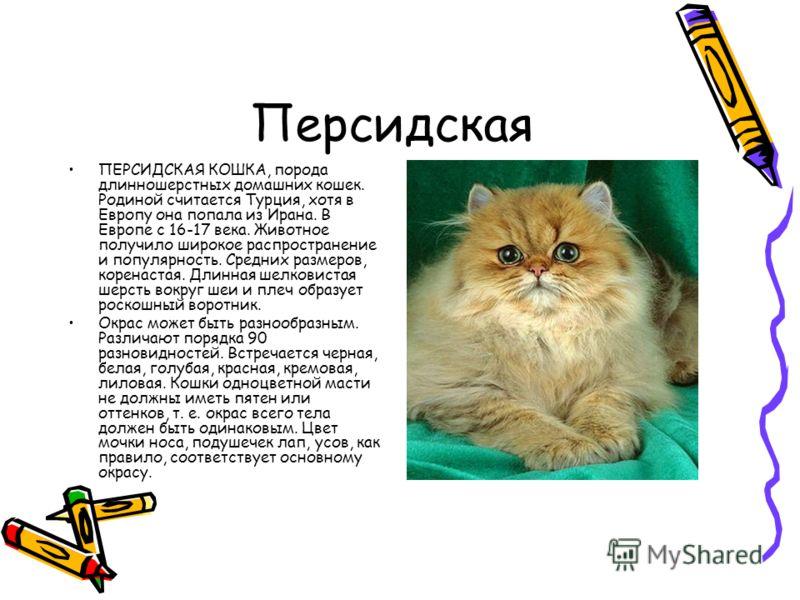 Персидская ПЕРСИДСКАЯ КОШКА, порода длинношерстных домашних кошек. Родиной считается Турция, хотя в Европу она попала из Ирана. В Европе с 16-17 века. Животное получило широкое распространение и популярность. Средних размеров, коренастая. Длинная шел
