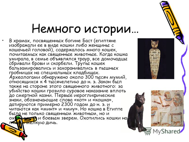 Немного истории… В храмах, посвященных богине Баст (египтяне изображали ее в виде кошки либо женщины с кошачьей головой), содержалось много кошек, почитаемых как священные животные. Когда кошка умирала, в семье объявлялся траур, все домочадцы сбривал