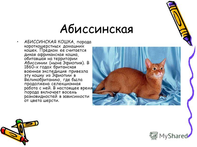 Абиссинская АБИССИНСКАЯ КОШКА, порода короткошерстных домашних кошек. Предком ее считается дикая африканская кошка, обитавшая на территории Абиссинии (ныне Эфиопия). В 1860-х годах британская военная экспедиция привезла эту кошку из Эфиопии в Великоб