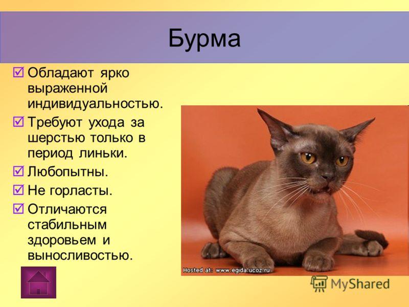 Бурма Бурма (назв. от англ. написания Бирмы - Burma), порода короткошерстных кошек, пришедшая с Востока. Бурма
