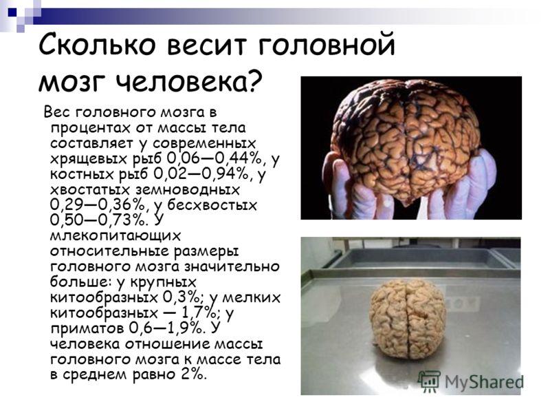 Сколько весит головной мозг человека? Вес головного мозга в процентах от массы тела составляет у современных хрящевых рыб 0,060,44%, у костных рыб 0,020,94%, у хвостатых земноводных 0,290,36%, у бесхвостых 0,500,73%. У млекопитающих относительные раз