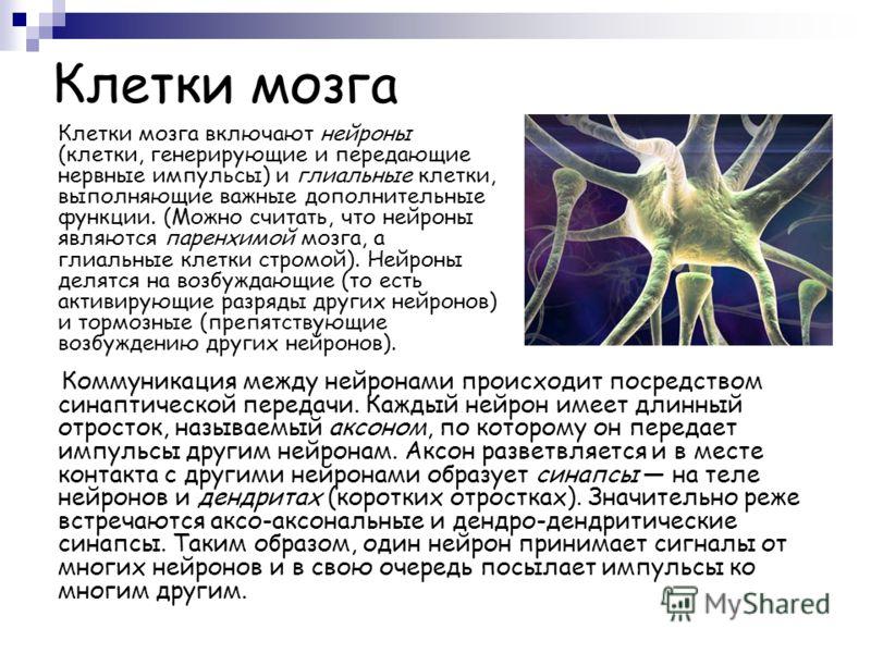 Клетки мозга Клетки мозга включают нейроны (клетки, генерирующие и передающие нервные импульсы) и глиальные клетки, выполняющие важные дополнительные функции. (Можно считать, что нейроны являются паренхимой мозга, а глиальные клетки стромой). Нейроны