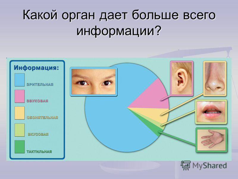Какой орган дает больше всего информации?
