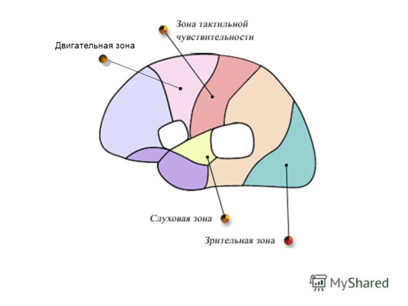 Двигательная зона