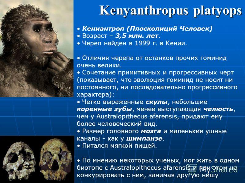 Жил в сухих лесах. Был двуногим. По строению зубов и челюстей очень схож с более поздними ископаемыми обезьянами. По некоторым признакам зубов этот вид является промежуточным между Ardipithecus ramidus и Australopithecus afarensis. Australopithecus a