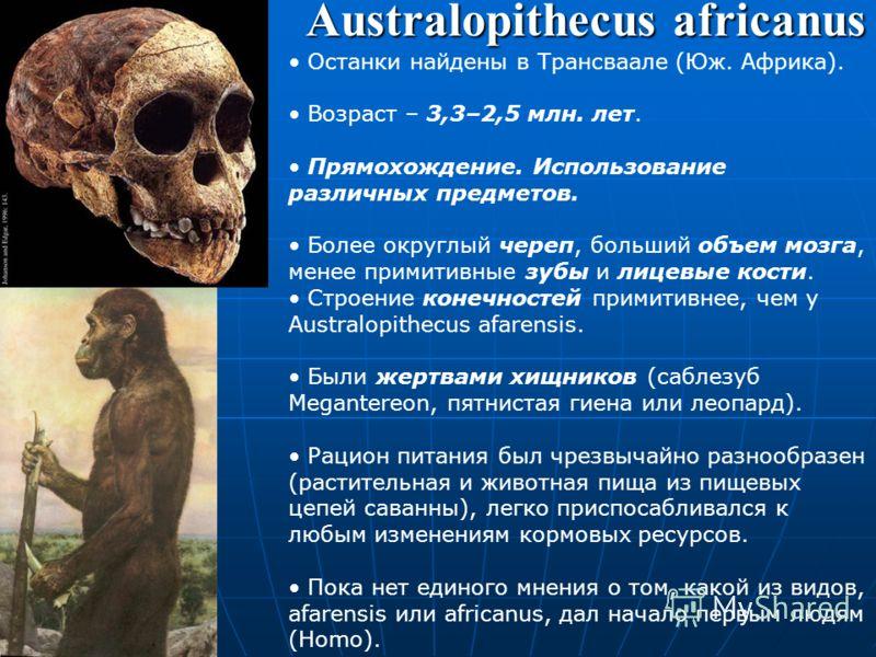 Australopithecus bahrelghazali Вид описан в 1995 г. Автор находки – Мишель Брунэ. Найден в Чаде. Возраст – 3–3,5 млн. лет. Типовой экземпляр – верхняя челюсть с семью зубами. Материал зубов сильно напоминает Australopithecus afarensis (поэтому некото