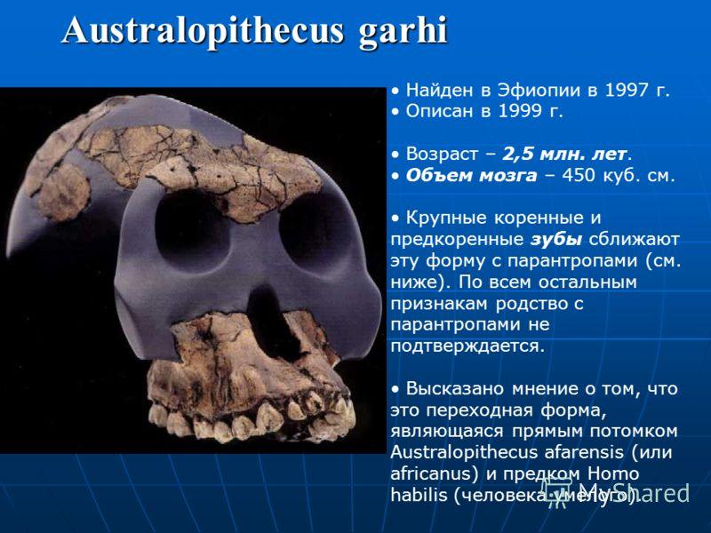 Australopithecus africanus Останки найдены в Трансваале (Юж. Африка). Возраст – 3,3–2,5 млн. лет. Прямохождение. Использование различных предметов. Более округлый череп, больший объем мозга, менее примитивные зубы и лицевые кости. Строение конечносте