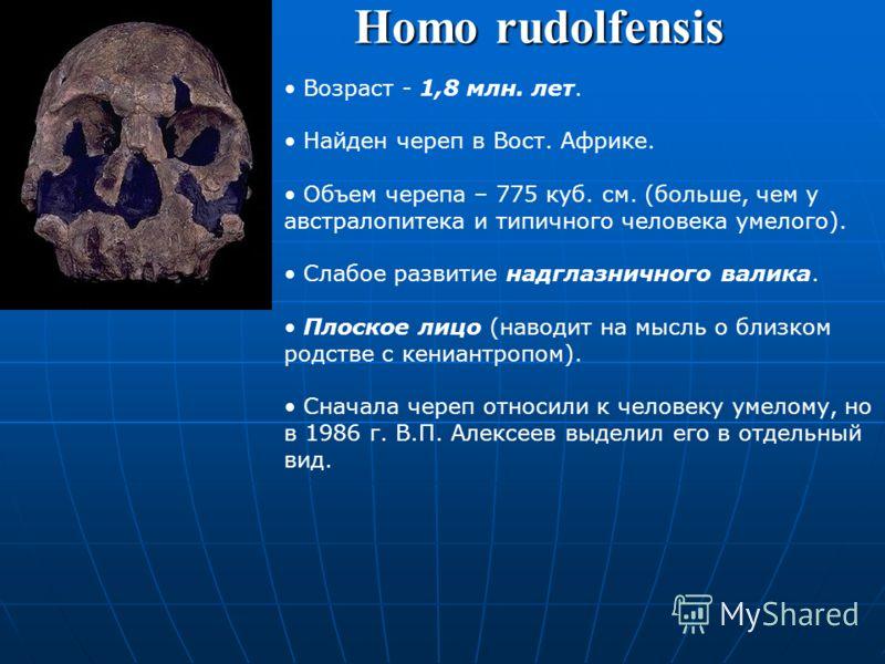 Homo habilis Человек умелый (хабилис). Возраст – 2,4–1,5 млн. лет. Найден в Вост. Африке. Древнейший представитель рода Homo. Объем мозга – 650 см (в среднем). Изготовление орудий (из грубо обработанной гальки) – Олдувайская культура. Коренные зубы м