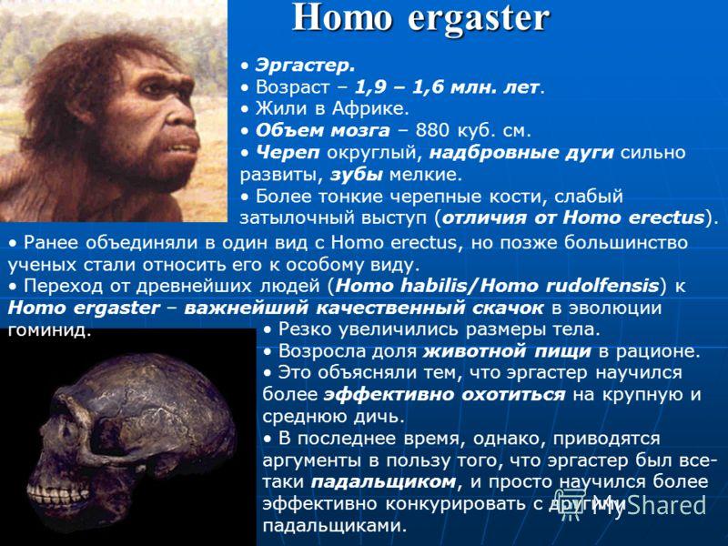 Homo georgicus Найдено три черепа и часть скелета в 2001 г. в Грузии. Описан в 2002 г. (гл.автор – Давид Лордкипанидзе) Возраст – 1,8 млн. лет. Самая древняя и самая примитивная находка гоминид (и людей) за пределами Африки. Форма предположительно ин