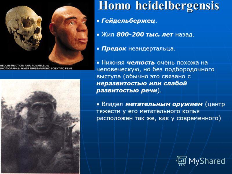 Homo antecessor Останки найдены в Испании, описаны в 1997 г. Около 1 млн. лет назад африканские популяции человека прямоходящего эволюционировали в новый вид Homo antecessor, популяции которого мигрировали в Европу. Вероятный общий предок гейдельберж