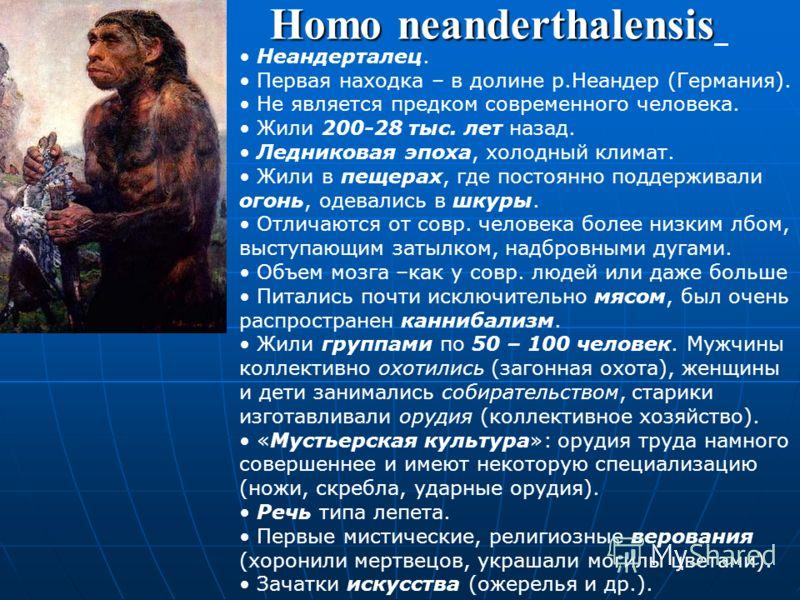 Homo heidelbergensis Гейдельбержец. Жил 800-200 тыс. лет назад. Предок неандертальца. Нижняя челюсть очень похожа на человеческую, но без подбородочного выступа (обычно это связано с неразвитостью или слабой развитостью речи). Владел метательным оруж