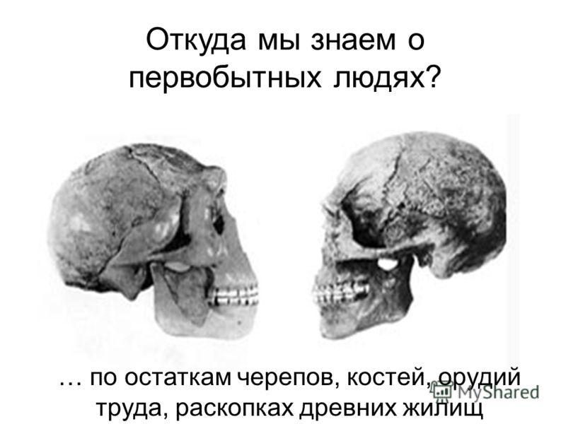 Откуда мы знаем о первобытных людях? … по остаткам черепов, костей, орудий труда, раскопках древних жилищ