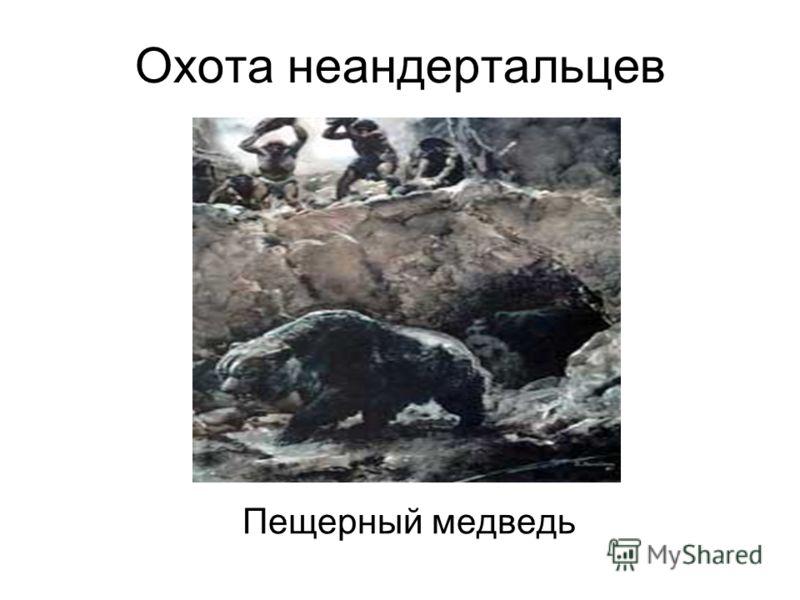 Охота неандертальцев Пещерный медведь
