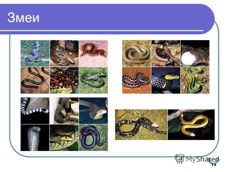 19 Змеи