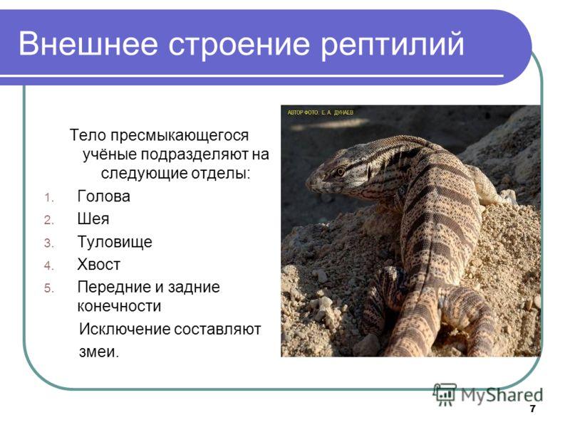 7 Внешнее строение рептилий Тело пресмыкающегося учёные подразделяют на следующие отделы: 1. Голова 2. Шея 3. Туловище 4. Хвост 5. Передние и задние конечности Исключение составляют змеи.