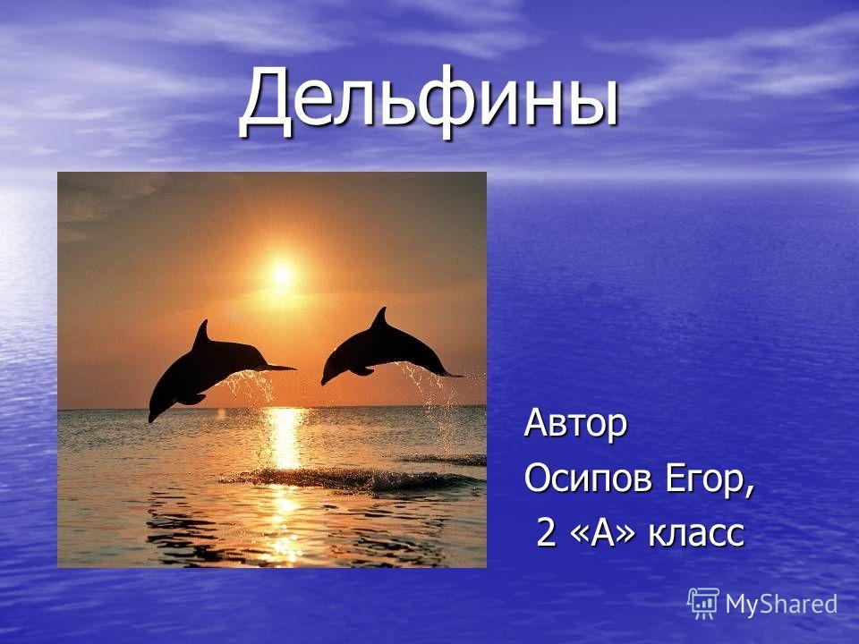 Дельфины Автор Осипов Егор, 2 «А» класс 2 «А» класс
