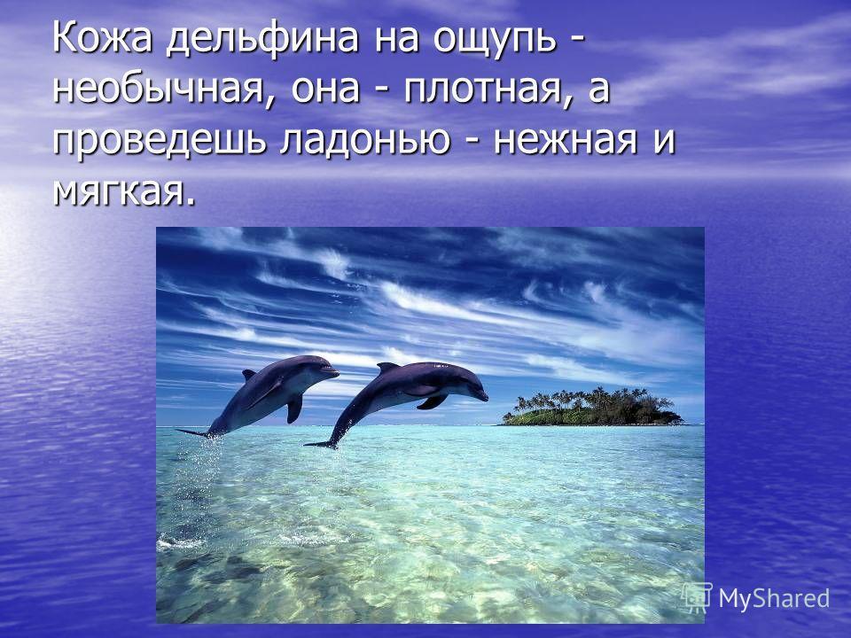 Кожа дельфина на ощупь - необычная, она - плотная, а проведешь ладонью - нежная и мягкая.