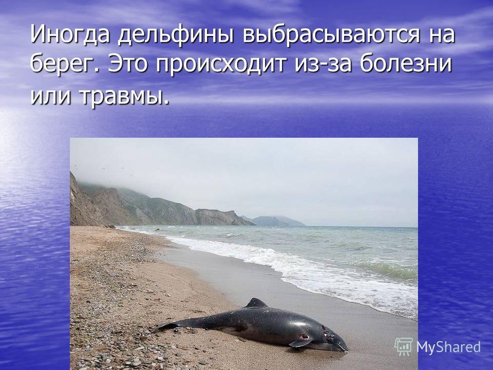 Иногда дельфины выбрасываются на берег. Это происходит из-за болезни или травмы.