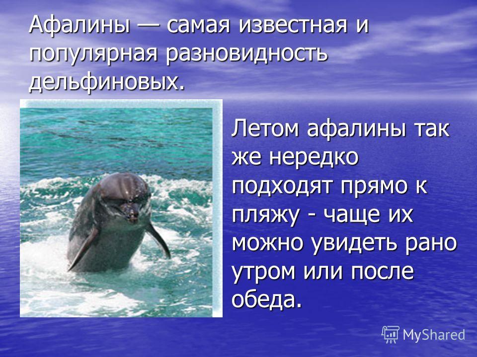 Афалины самая известная и популярная разновидность дельфиновых. Летом афалины так же нередко подходят прямо к пляжу - чаще их можно увидеть рано утром или после обеда.