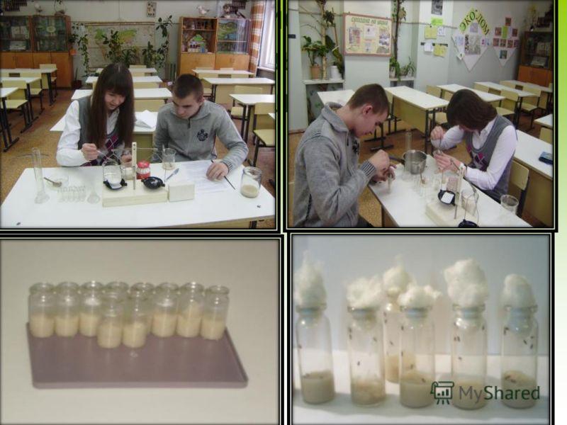 Приготовление питательной среды для выращивания плодовой мушки дрозофилы.