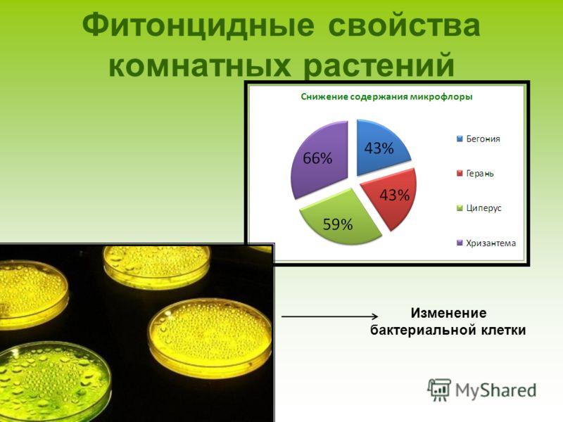 Фитонцидные свойства комнатных растений Изменение бактериальной клетки