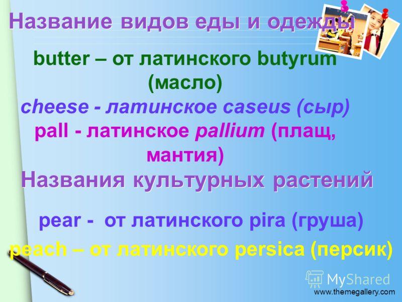www.themegallery.com Название видов еды и одежды butter – от латинского butyrum (масло) cheese - латинское caseus (сыр) pall - латинское pallium (плащ, мантия) Названия культурных растений pear - от латинского pira (груша) peach – от латинского persi