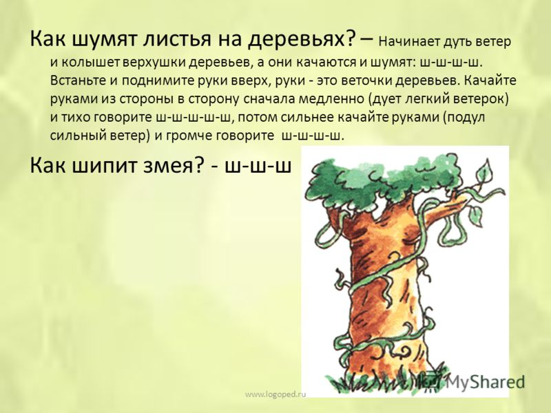 Как шумят листья на деревьях? – Начинает дуть ветер и колышет верхушки деревьев, а они качаются и шумят: ш-ш-ш-ш. Встаньте и поднимите руки вверх, руки - это веточки деревьев. Качайте руками из стороны в сторону сначала медленно (дует легкий ветерок)