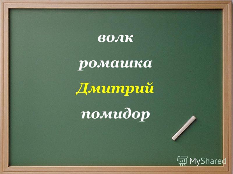 волк ромашка Дмитрий помидор