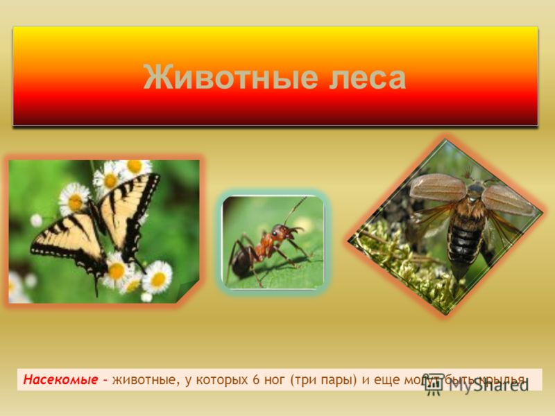 Животные леса Насекомые – животные, у которых 6 ног (три пары) и еще могут быть крылья