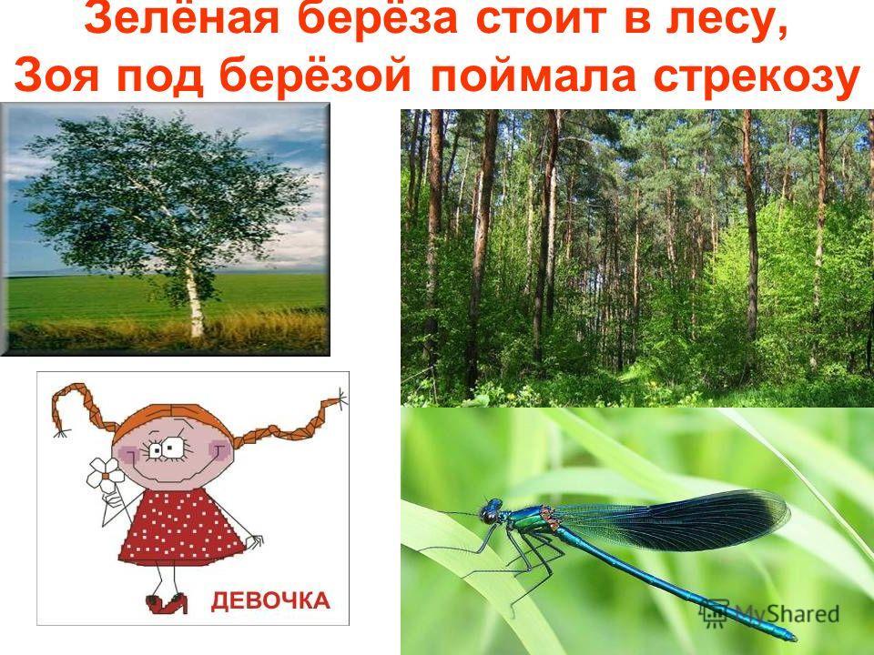 Зелёная берёза стоит в лесу, Зоя под берёзой поймала стрекозу