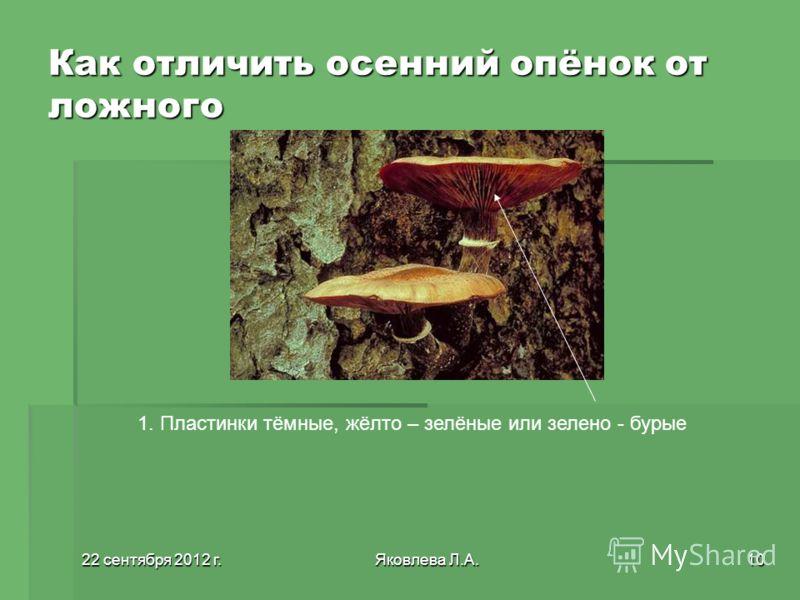 22 сентября 2012 г.22 сентября 2012 г.22 сентября 2012 г.22 сентября 2012 г.Яковлева Л.А.10 Как отличить осенний опёнок от ложного 1. Пластинки тёмные, жёлто – зелёные или зелено - бурые