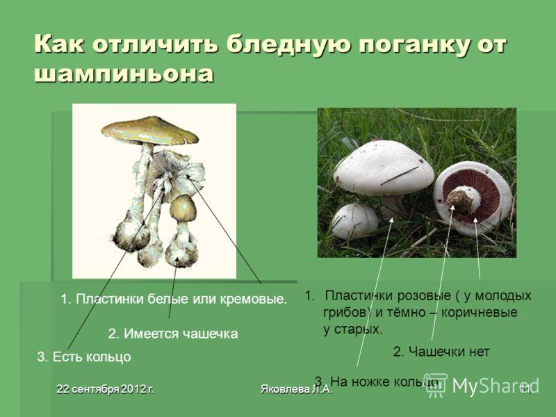 22 сентября 2012 г.22 сентября 2012 г.22 сентября 2012 г.22 сентября 2012 г.Яковлева Л.А.11 Как отличить бледную поганку от шампиньона 1. Пластинки белые или кремовые. 2. Имеется чашечка 3. Есть кольцо 1.Пластинки розовые ( у молодых грибов) и тёмно