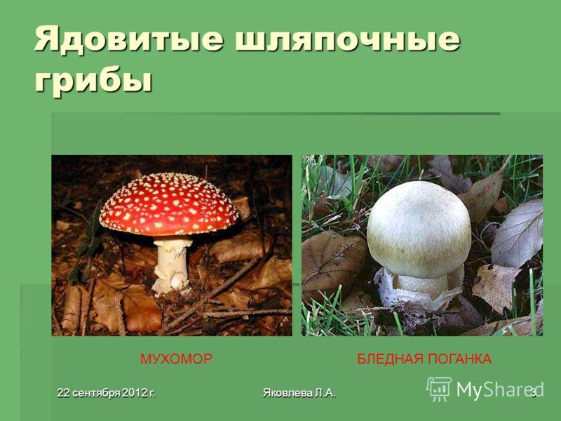 22 сентября 2012 г.22 сентября 2012 г.22 сентября 2012 г.22 сентября 2012 г.Яковлева Л.А.3 Ядовитые шляпочные грибы МУХОМОРБЛЕДНАЯ ПОГАНКА